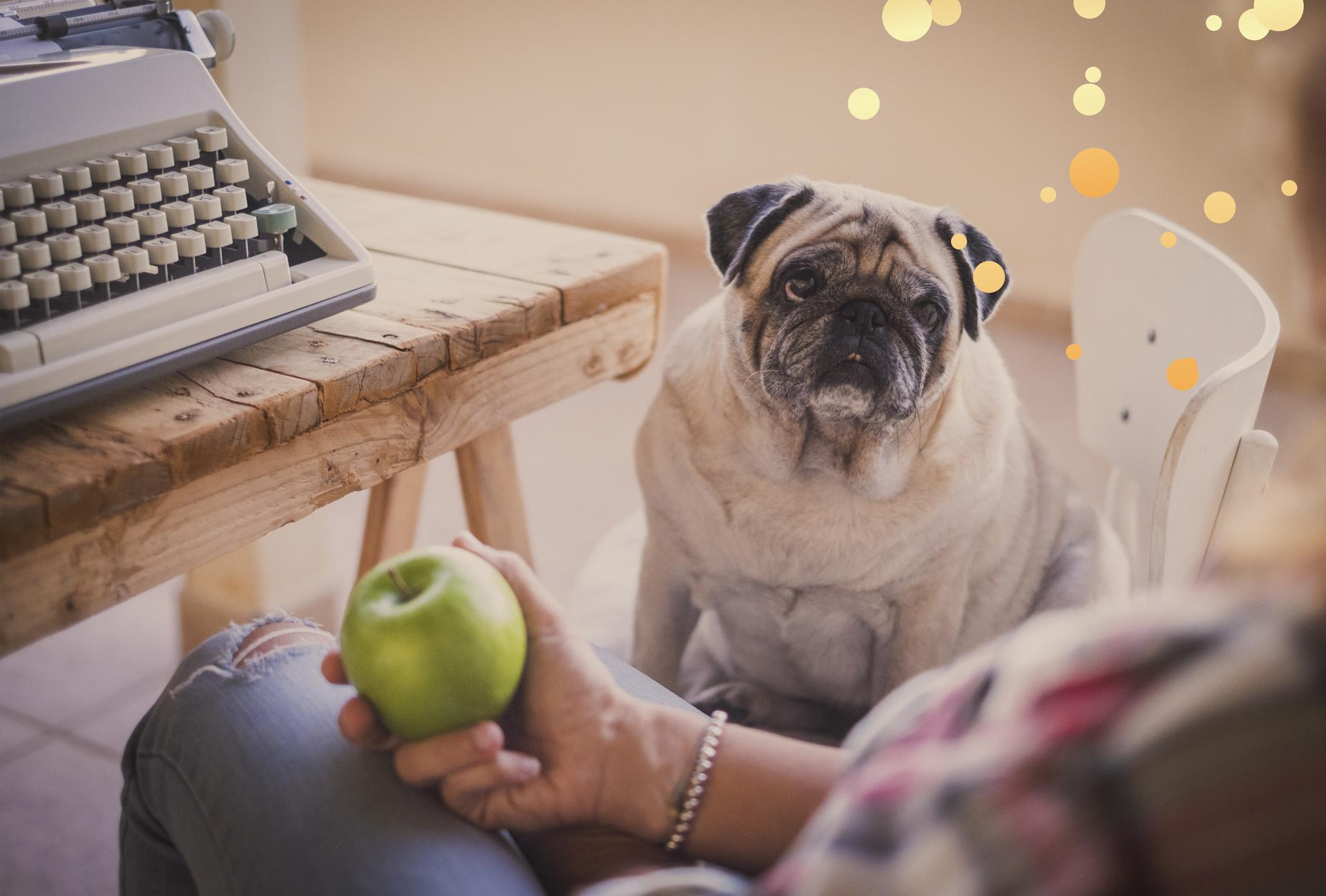 Cómo evitar o tratar el sobrepeso en los perros